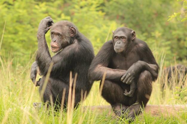 Chimp Eden Nelspruit – Tuesday Special!
